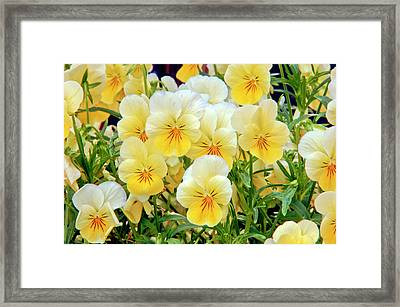 The Group Framed Print by James Steele