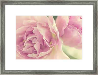 Tulips Framed Print by Cindy Grundsten
