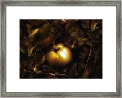 Vine Ripe Framed Print by Jessica Jenney