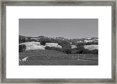 Vineyards Of Napa Valley Framed Print by Mountain Dreams