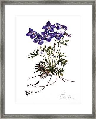 Violets Framed Print by Danuta Bennett