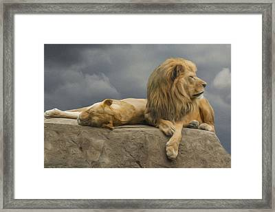 Watching And Waiting Framed Print by Jack Zulli