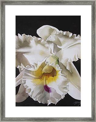White Cattleya Orchid Framed Print by Alfred Ng