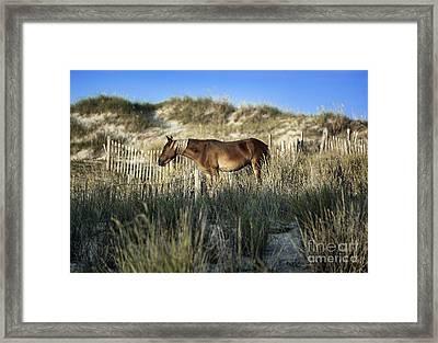 Wild Spanish Mustang Framed Print by John Greim
