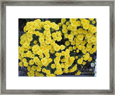 Yellow Flower Framed Print by Joyce Woodhouse