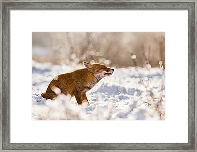 Zen Fox Series -zen Fox In The Snow Framed Print by Roeselien Raimond