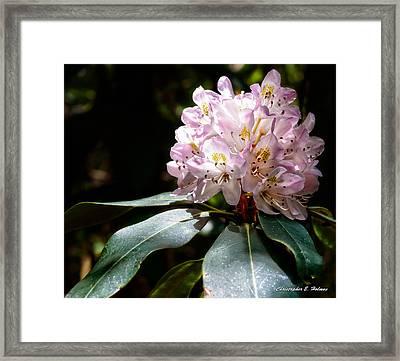 20120621-dsc05834 Framed Print by Christopher Holmes