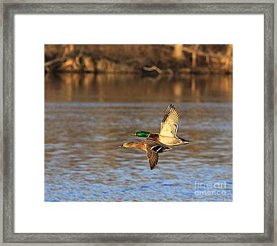 2gether For Life Framed Print by Robert Pearson