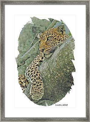 African Leopard Framed Print by Larry Linton