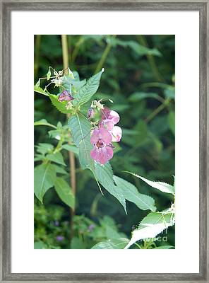 Alpine Wildflower Framed Print by Ilan Rosen