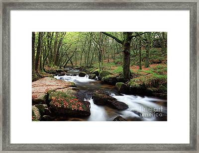 Autumn At Golitha Falls Framed Print by Carl Whitfield