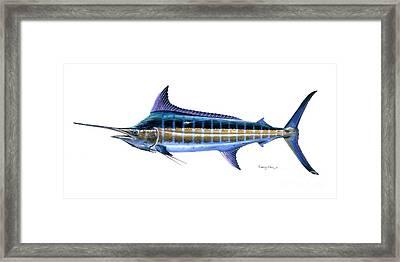 Blue Marlin Framed Print by Carey Chen