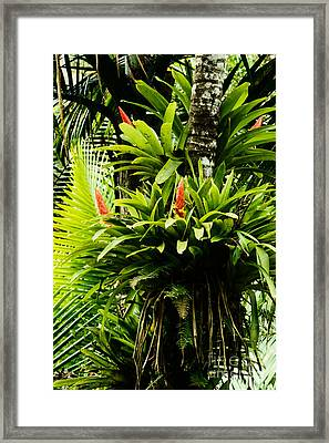 Bromeliads El Yunque National Forest Framed Print by Thomas R Fletcher