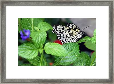 Paper Kite Butterfly No. 3 Framed Print by Sandy Taylor