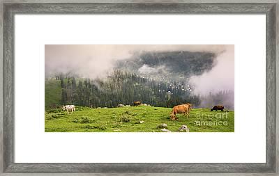 Cows Framed Print by Svetlana Sewell