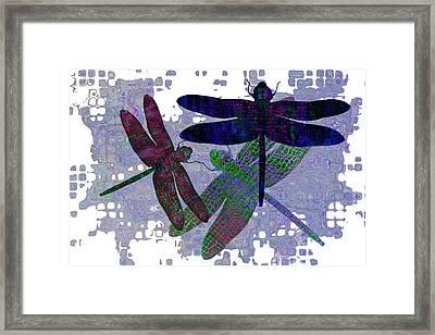 3 Dragonfly Framed Print by Jack Zulli