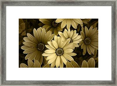 Floral Gold Collection Framed Print by Marvin Blaine