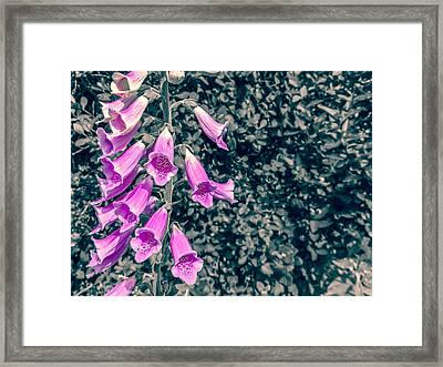 Foxglove Framed Print by Angela Aird