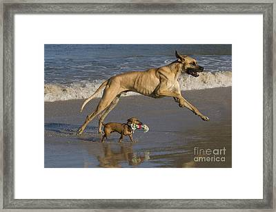 Giant And Tiny Dogs Framed Print by Jean-Louis Klein & Marie-Luce Hubert