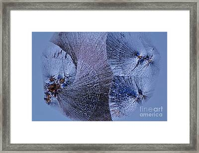 Lactose Monohydrate, Lm Framed Print by Antonio Romero