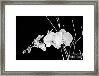 Orchid Framed Print by Scott Pellegrin
