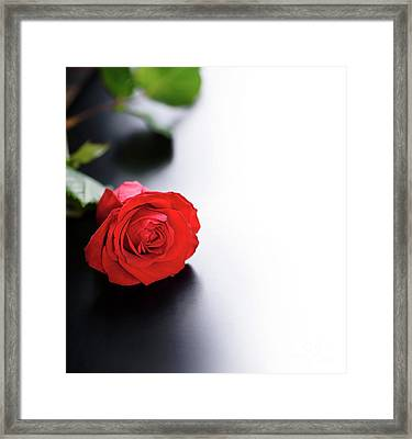 Red Rose Framed Print by Jelena Jovanovic