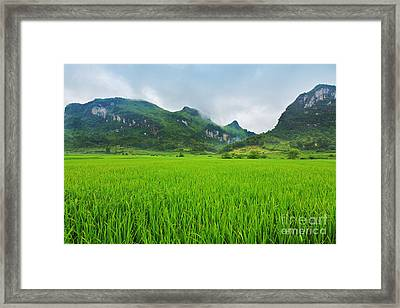 Rice Field Framed Print by MotHaiBaPhoto Prints