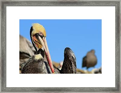 Strike A Pose Framed Print by Carl Jackson