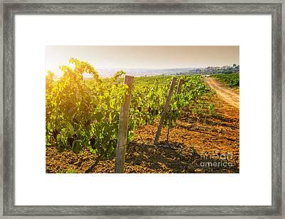 Vineyard Framed Print by Carlos Caetano