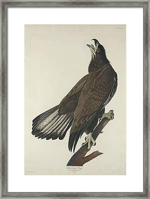 White Headed Eagle Framed Print by John James Audubon