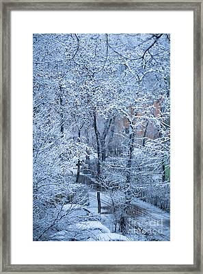 Winter Framed Print by Gabriela Insuratelu