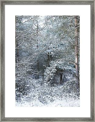 Winter Framed Print by Svetlana Sewell