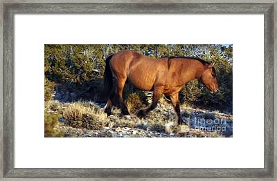 American Wild Horse Mustang On Posters Canvas Pillows Curtains Duvetcovers Phone Cases Tshirts Jerse Framed Print by Navin Joshi