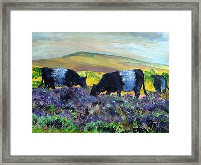 Belted Galloway Cows Framed Print by Mike Jory