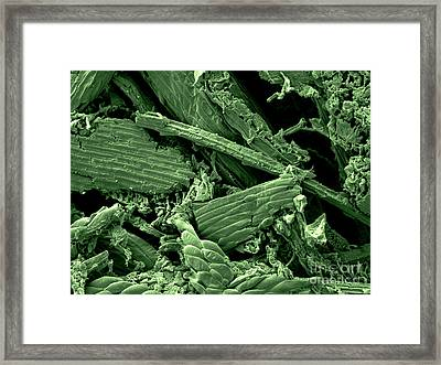 Canada Goose Droppings Framed Print by Scimat