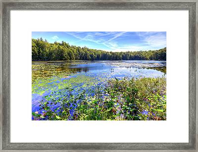 Cary Lake In The Adirondacks Framed Print by David Patterson