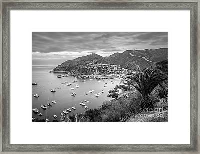 Catalina Island Avalon Bay Black And White Picture Framed Print by Paul Velgos