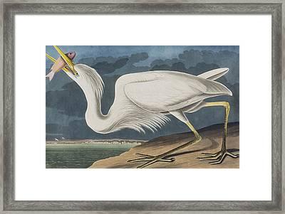 Great White Heron Framed Print by John James Audubon