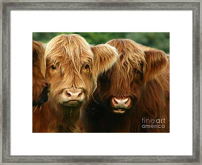 Highland Cattle Framed Print by Angel  Tarantella