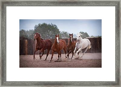 4 Horses Framed Print by Steve Gadomski