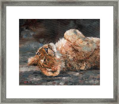 Lion Cub Framed Print by David Stribbling