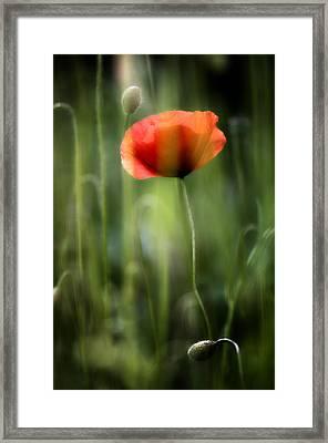 Poppy Framed Print by Silke Magino