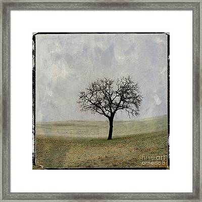 Textured Tree Framed Print by Bernard Jaubert