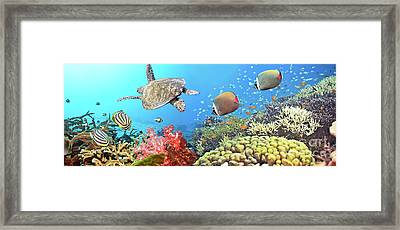 Underwater Panorama Framed Print by MotHaiBaPhoto Prints