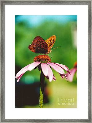 #416 14a Butterfly Fritillary, Coneflower Lunch Break Good Till The Last Drop Framed Print by Robin Lee Mccarthy Photography