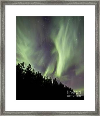 Aurora Borealis Over Trees, Yukon Framed Print by Jonathan Tucker