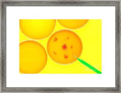 Biotechnology Experiment In Science Research Lab Framed Print by Olivier Le Queinec