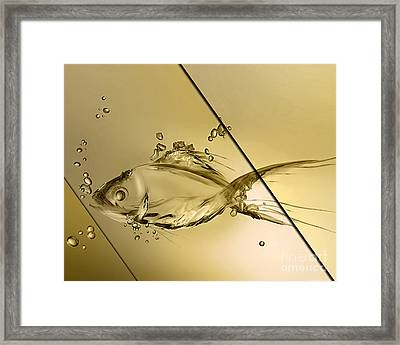 Fish Collection Framed Print by Marvin Blaine