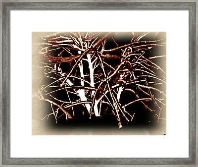 Grounded In Earth  - Series 1 Framed Print by Debra     Vatalaro