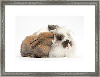 Rabbit And Baby Bunny Framed Print by Mark Taylor